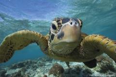 Auge in Auge mit der Meeresschildkröte