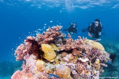 Tauchen an den Ribbon Reefs im Great Barrier Reef