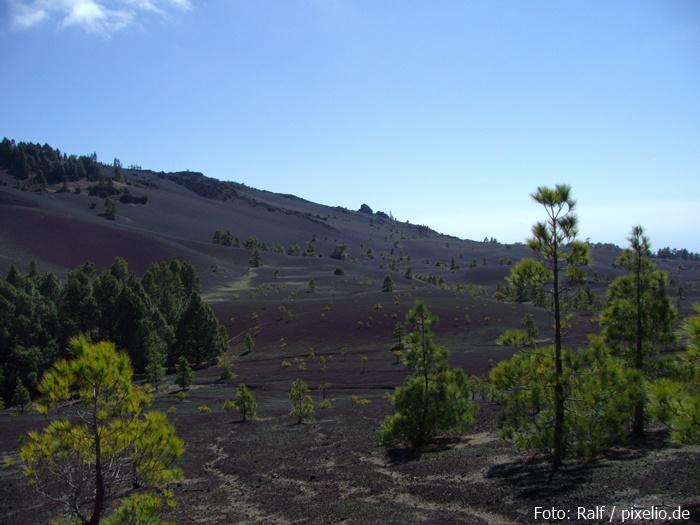 Schwarzer Boden mit grünen Tupfen auf La Palma