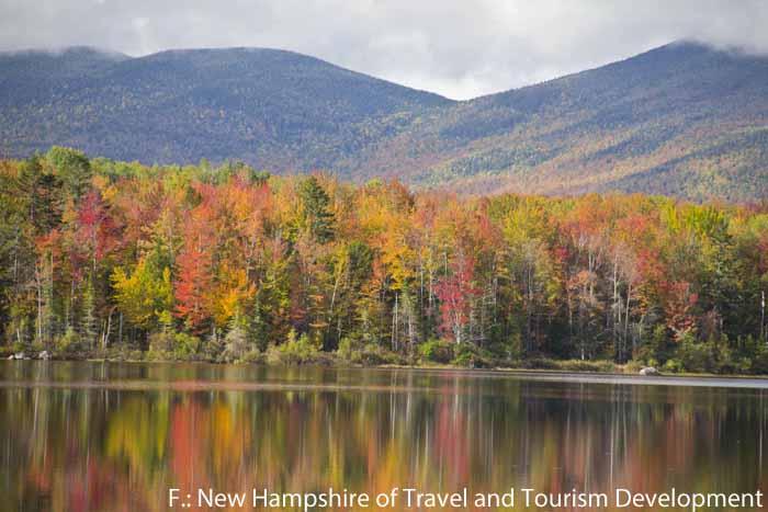 Bunt verfärbte Bäume im Jericho Mountain State Park (New Hampshire/New England)