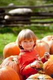 Herbst auf der Maple Bank Farm in Roxbury (Connecticut, New England)