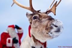 Vierbeiniger Helfer des Weihnachtsmanns in Rovaniemi