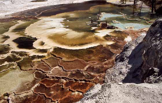 Mammoth Terraces im Yellowstone Foto: nps.gov