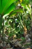 Der traumhafte Urwald im Vallée de Mai