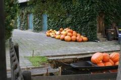 Lehde (Spreewald) im Herbst Foto: spreewald-info.de