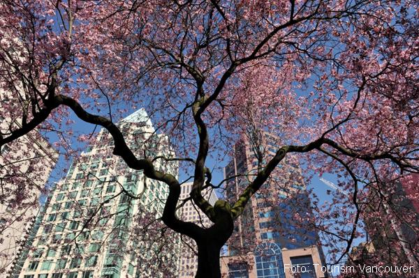 Frühling in Vancouver
